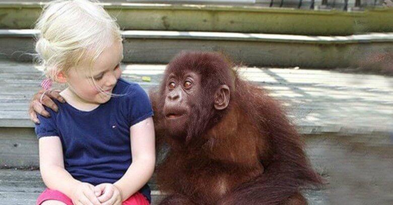 Los gorilas la vuelven a ver por primera vez en 12 años y su reacción no tiene precio