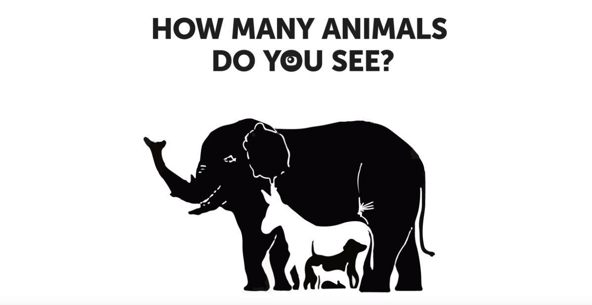 ¿Cuántos animales logras descubrir?