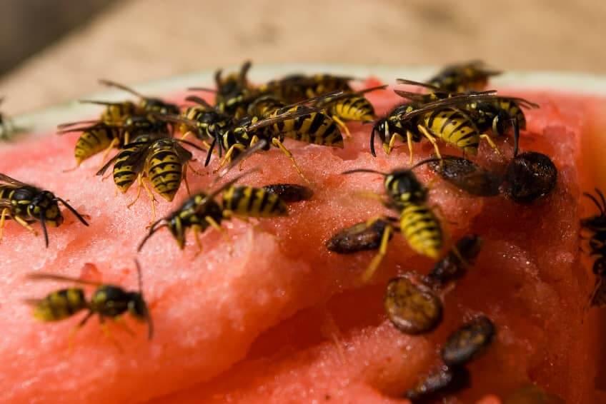 Aversión espantosa de las avispas